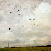 The Crows - Diana Jane Art