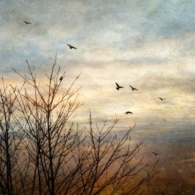 The Crows - Take Flight 1 - Diana Jane Art