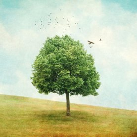 Diana Jane Art, Summer, tree, photography, digital art, wall art,