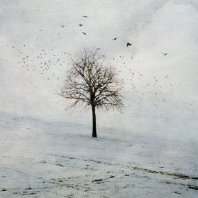 Winter Tree. Diana Jane Art