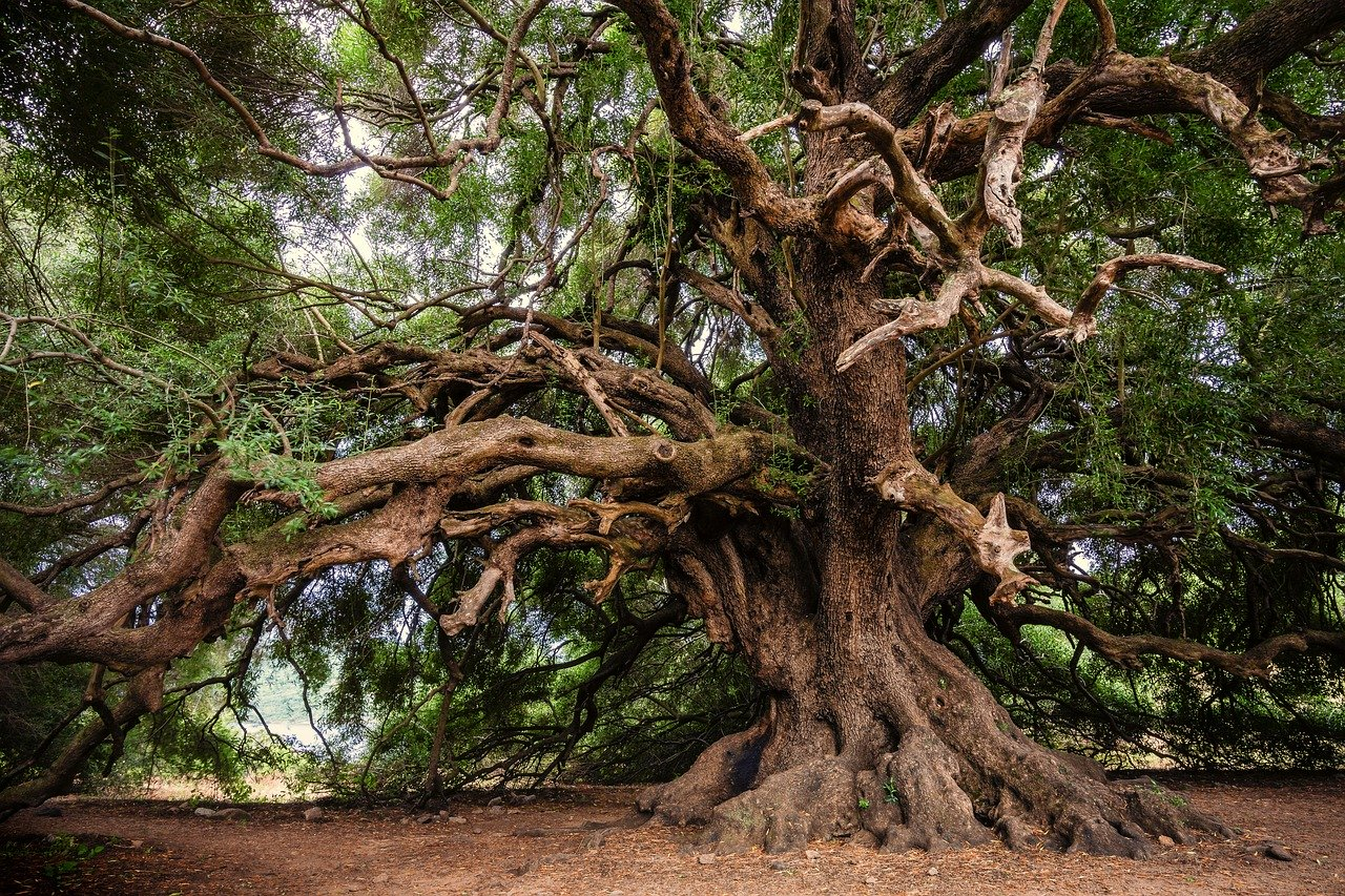 Behind the Hymn: Beneath the Old Olive Tree