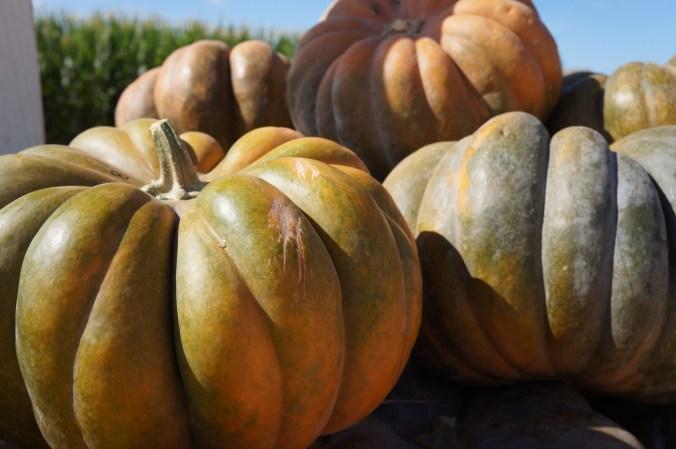 photograph of pumpkins