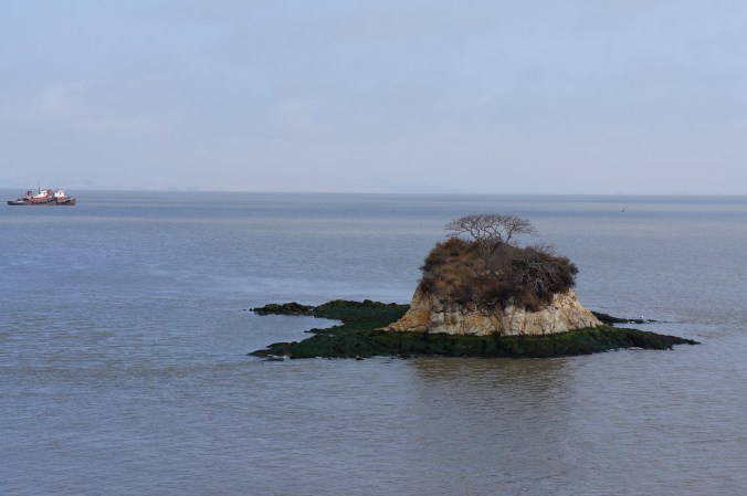 photograph of an island in the middle of the bay with a tree that looks dead in the center