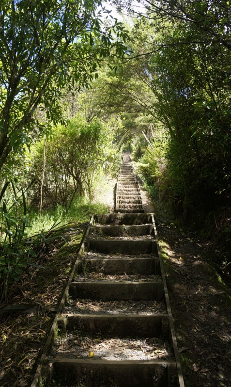 photograph of wooden staircase leading up a steep hill into a forest