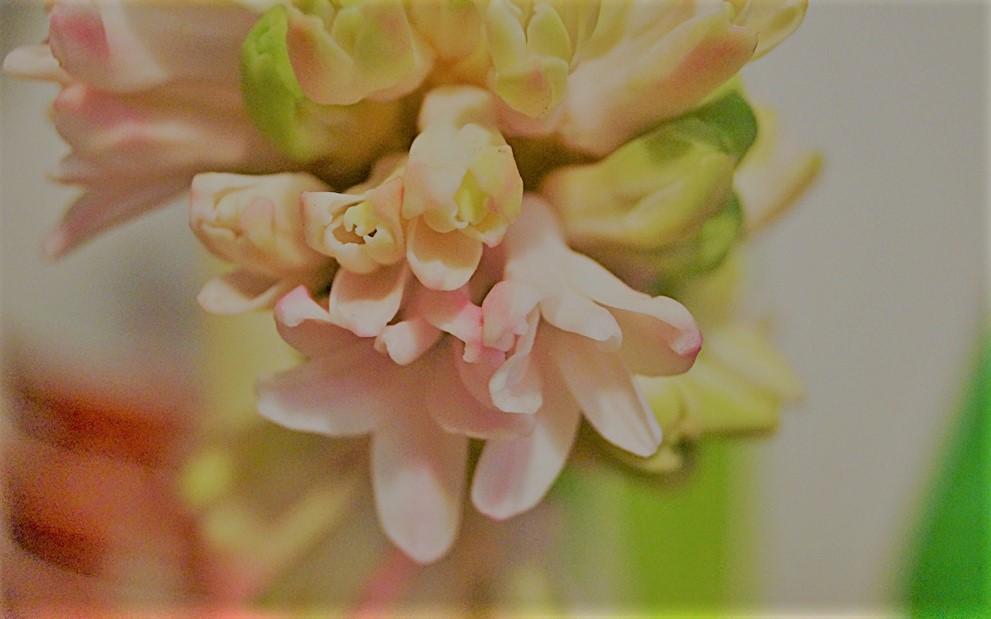 Slow Living: Aktivitäten im Frühling