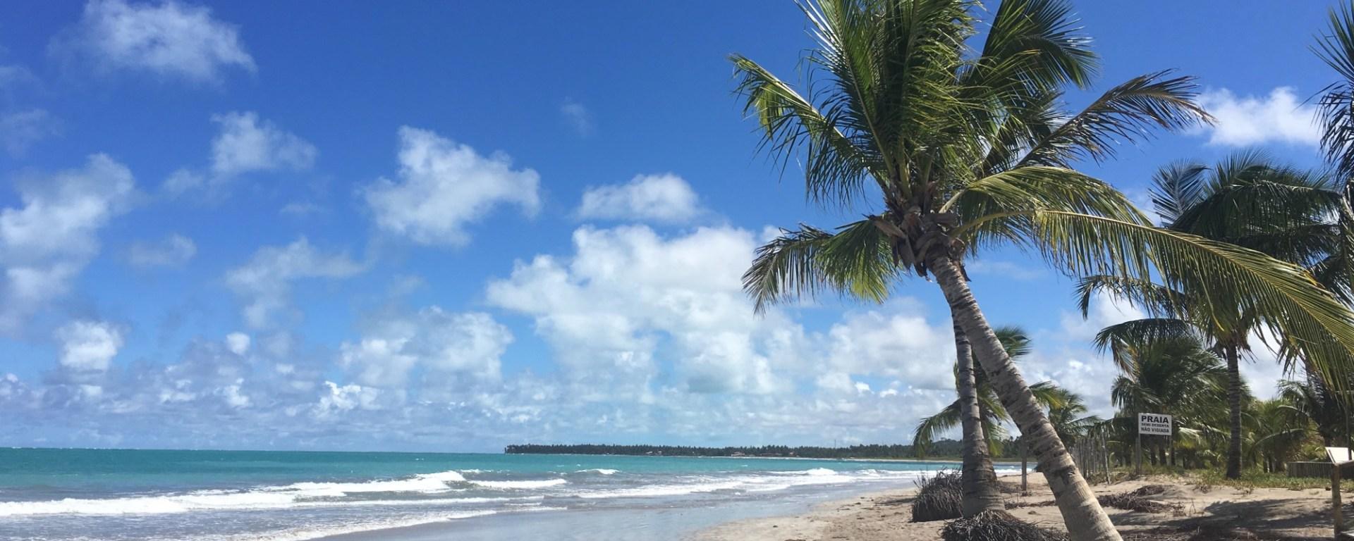 Maceió, Alagoas, praia de Ipioca, Hibiscus