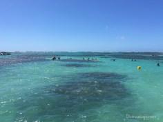 Os corais