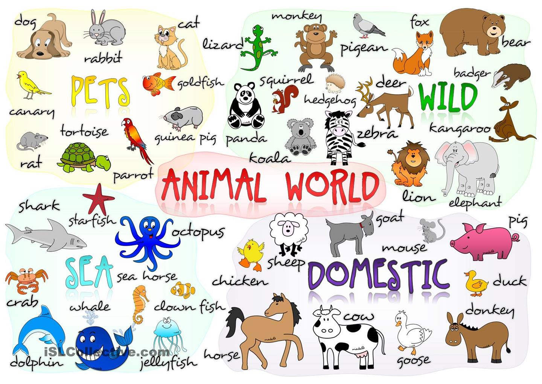 Canadian Animal Sounds Worksheet