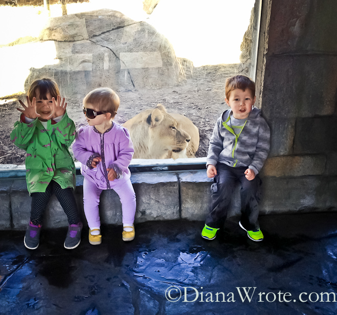 zoo 2014-4