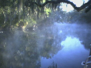 Mist over Blue Springs