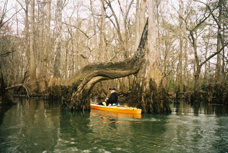 Paddling Under a Tree Trunk