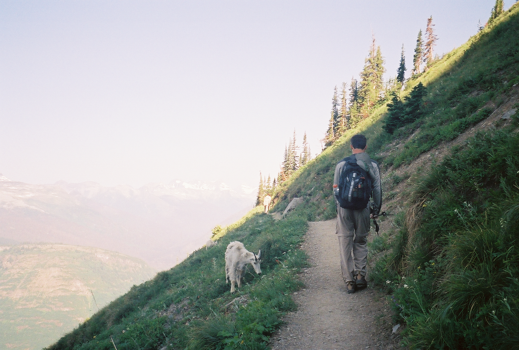 Hiking with Mountain Goats