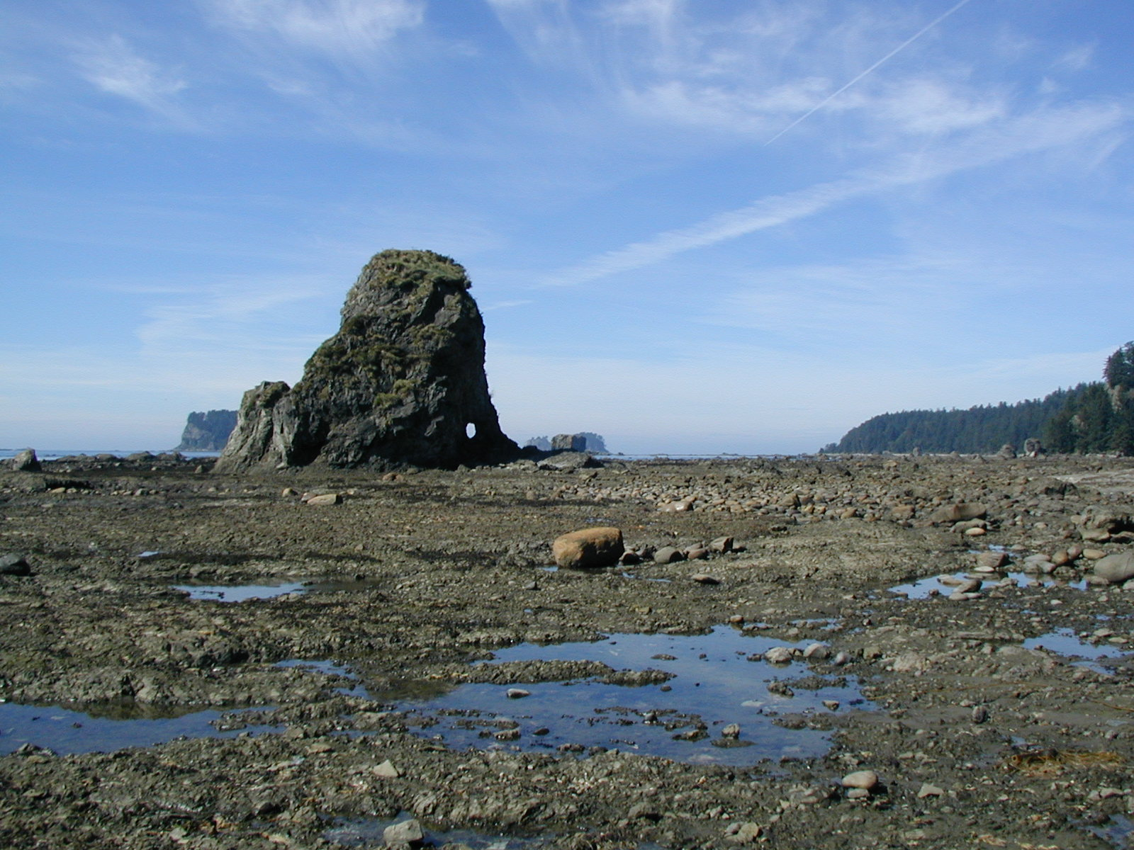 Low Tide - Pacific Style