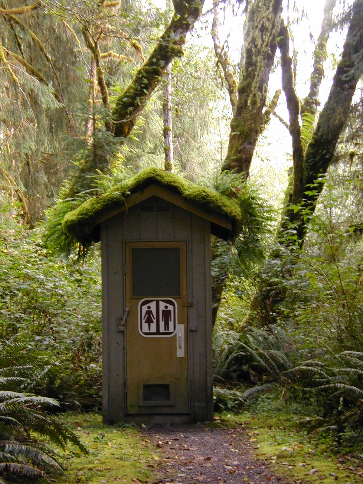 Moss and Fern Roof Outhouse