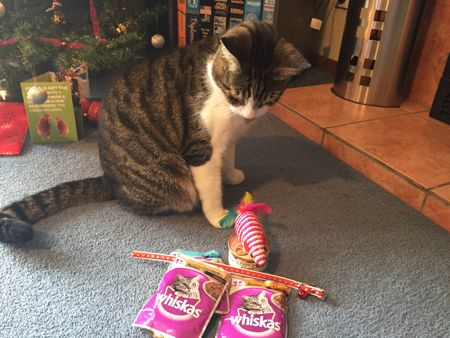 Photo of Max and his presents: cat food, a collar, a toy mouse.