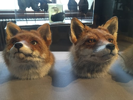 Two fox heads, one with human eyes.