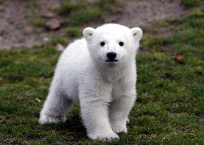 knut-the-polar-bear-berlin-zoo-4-07.jpg