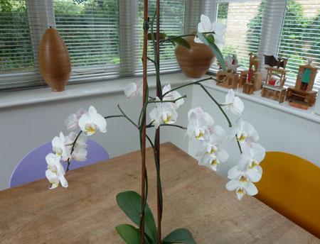 orchidmark2