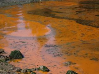 rust_coloured_algal_bloom