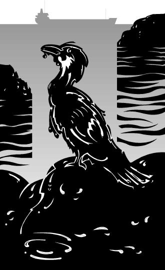 oil spill bird