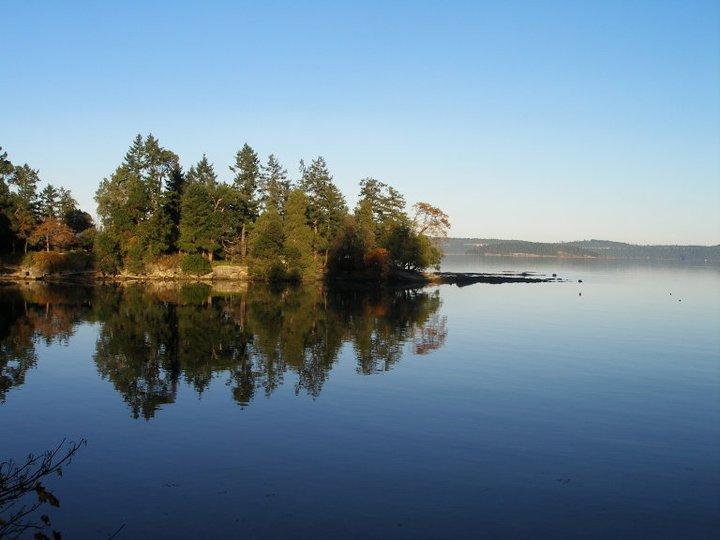 ocean reflecting trees