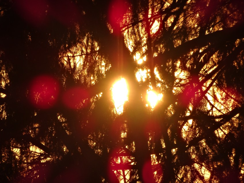red sun flares through trees
