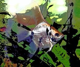 Pesce nell'acquario
