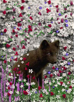 Wordless Wednesday - Bucky in Flowers II