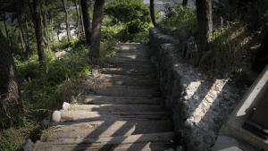 log-walkway