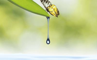 serine_butterfly