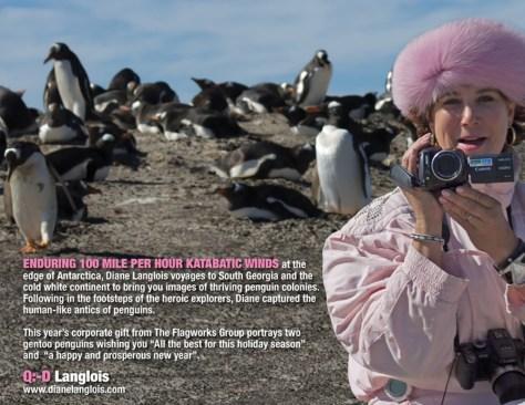 For-Flagworks-Saunders-Island-Falkland-Islands