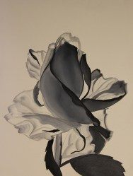 Black-and-White-Rose-18x24