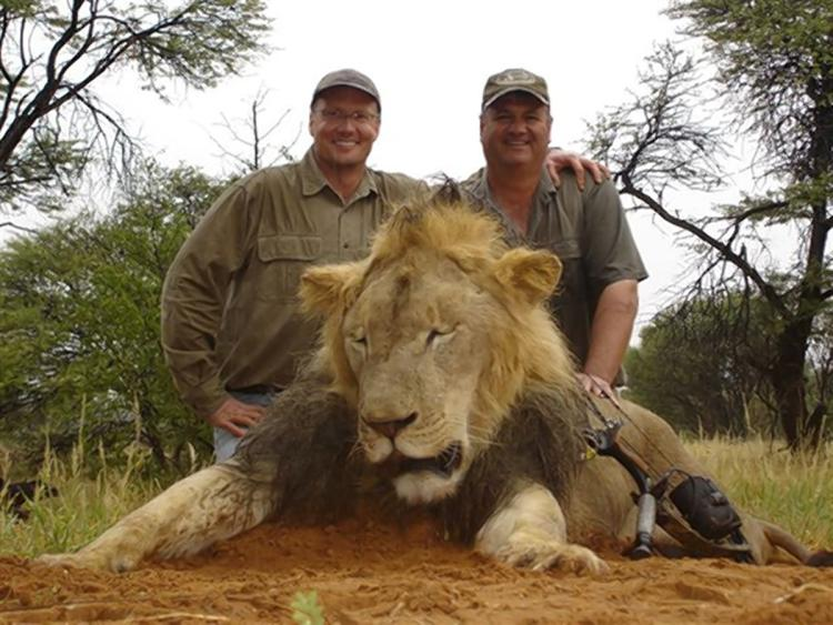 Animal rights for lions