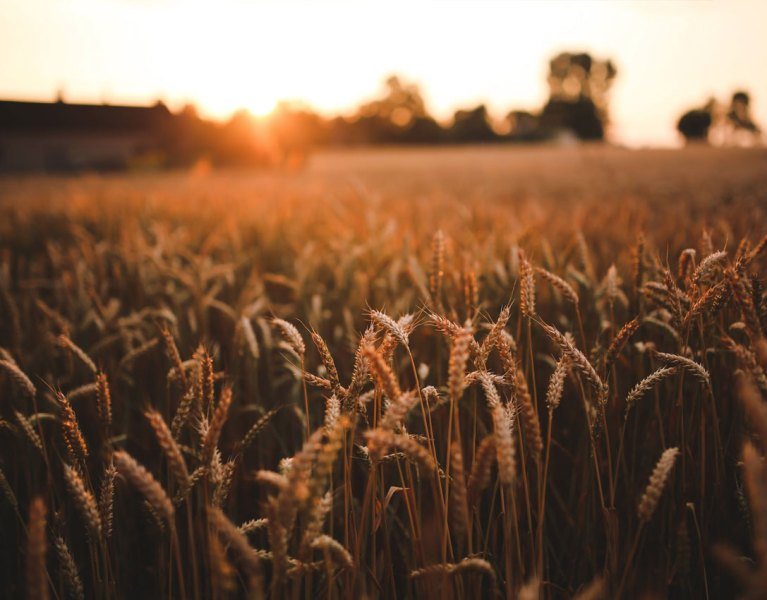 Will These Common Problems Bring Down Your Agricultural Business?