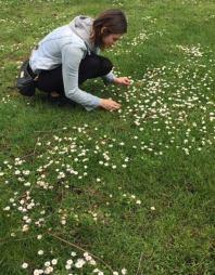 brookie picking daisies