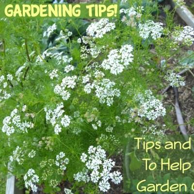 Basic Home Gardening Tips, Tricks & Ideas!
