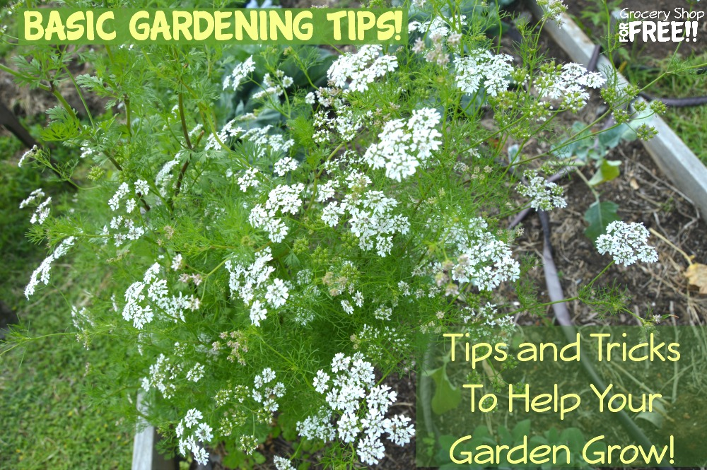 Basic Gardening Tips