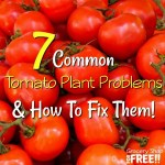 7 Tomato Plant Problems And Solutions!  Get Prepared NOW!