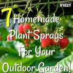 7 Homemade Plant Sprays For Your Outdoor Garden!