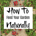 How To Feed Your Garden Naturally With What You Already Have