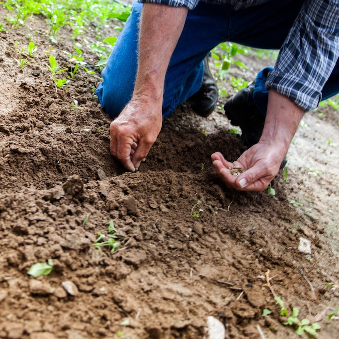 Saving seeds ensures better production in year's to come.  In this article we discuss how and why to save seeds from your garden.