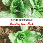 Ways To Garden Without Breaking Your Back