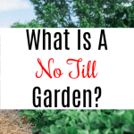 What is No Till Gardening? Is It For Me?