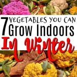 7 Vegetables You Can Grow Indoors In Winter