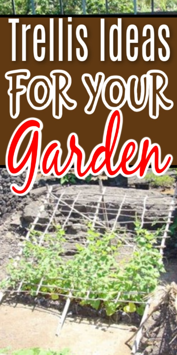 A garden trellis can bring beauty and functionality to your garden. From DIY to store bought, click through NOW to see some ideas...