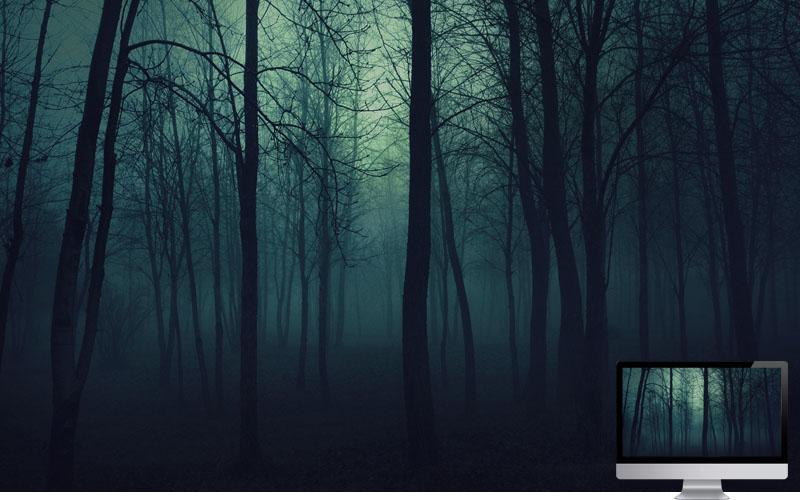 #4. Wood Trees Gloomy Fog Haze Darkness