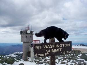Marty on his Mount Washington throne (photo by Brian Clark, a former MWOB observer).