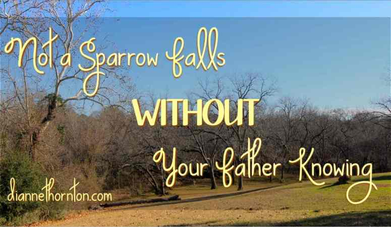 Not a Sparrow Falls WITHOUT Your Father Knowing
