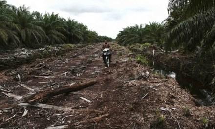 Lingkungan: Arena Kontestasi dari Korporasi sampai Negara
