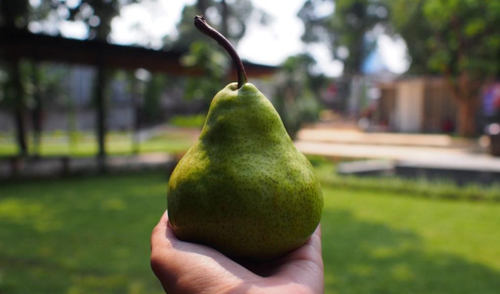 manfaat buah pear